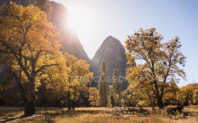 Vista paisagem com floresta de outono — Fotografia de Stock