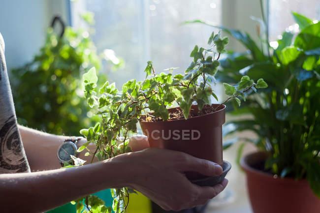 Femme tenant une plante en pot — Photo de stock