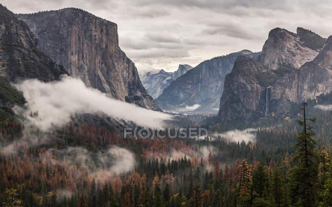 Vue de brume de vallée forestière — Photo de stock