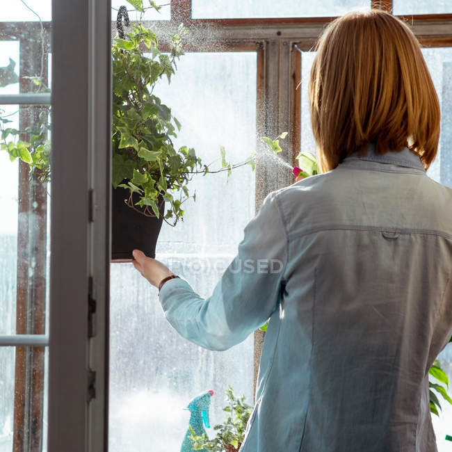 Woman spraying potted plant — Stock Photo