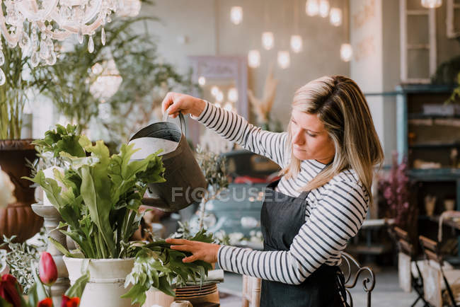 Florist watering flowers — Stock Photo