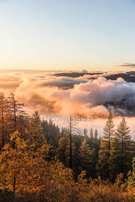 Mist over valley forest at sunrise — Stock Photo