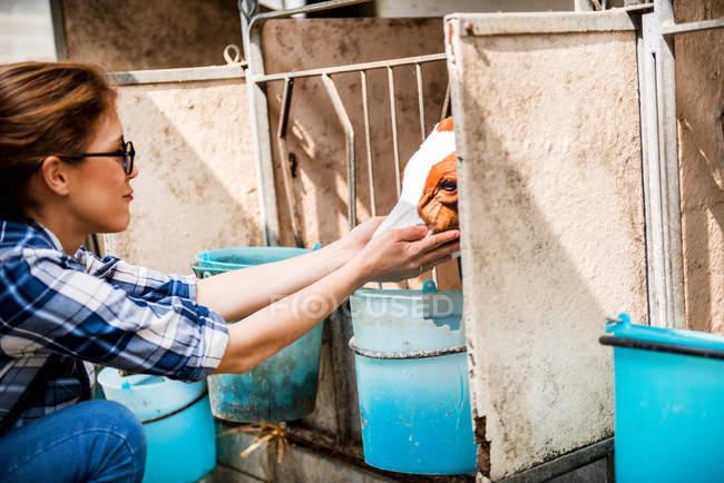 Жіночий фермер Петтінг теля — стокове фото