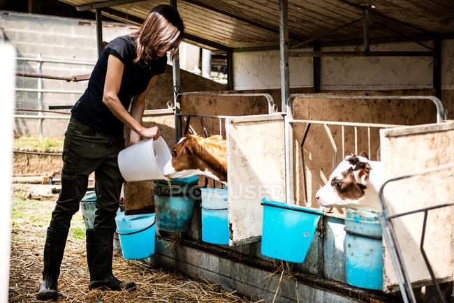 Agricultora fêmea alimentando bezerros — Fotografia de Stock