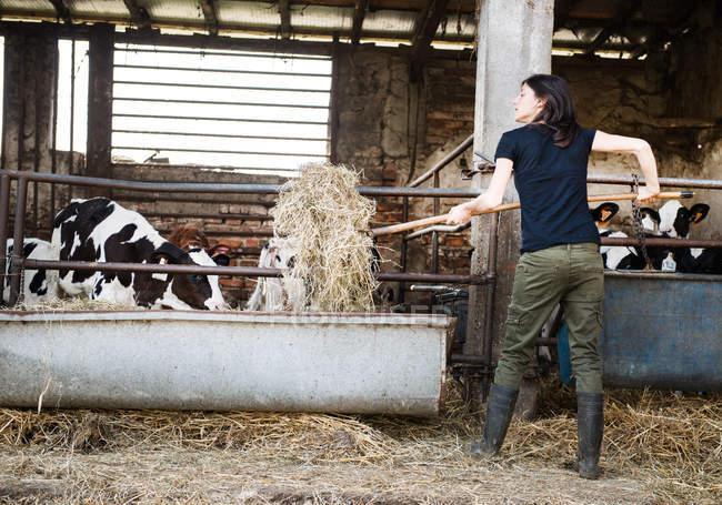 Female farmer feeding calves — Stock Photo