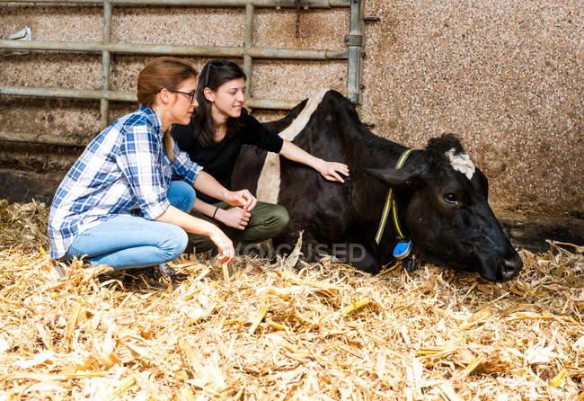 Bäuerinnen hüten kranke Kuh — Stockfoto