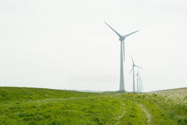 Rangée d'éoliennes dans le champ — Photo de stock