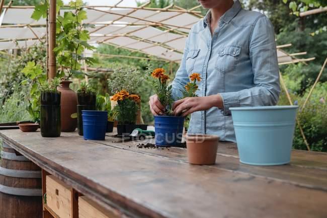 Woman potting plant — Stock Photo