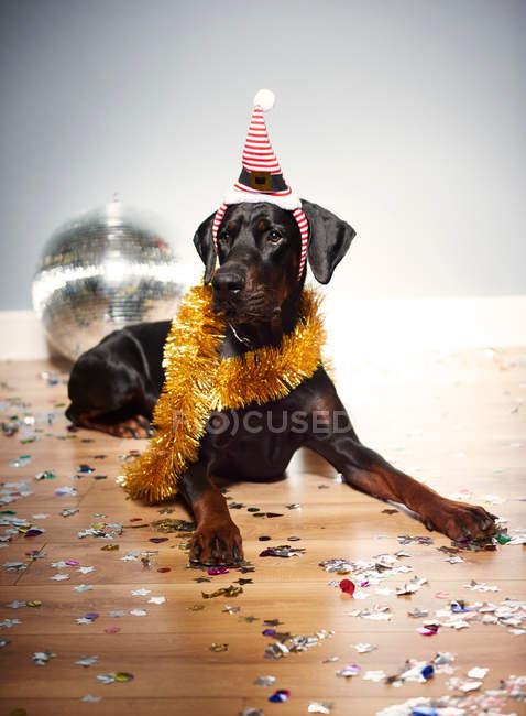 Cane con cappello Babbo Natale — Foto stock