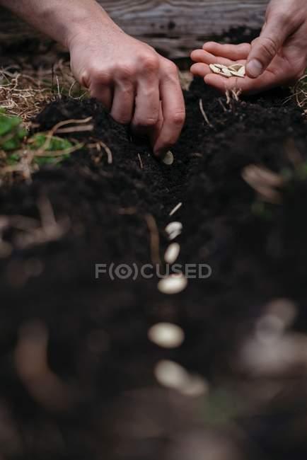 Donna piantare semi nel terreno — Foto stock