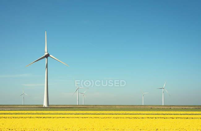 Ветрогенераторы в поле пейзаж — стоковое фото