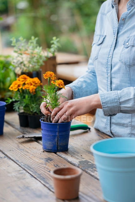 Woman potting plant — Stock Photo