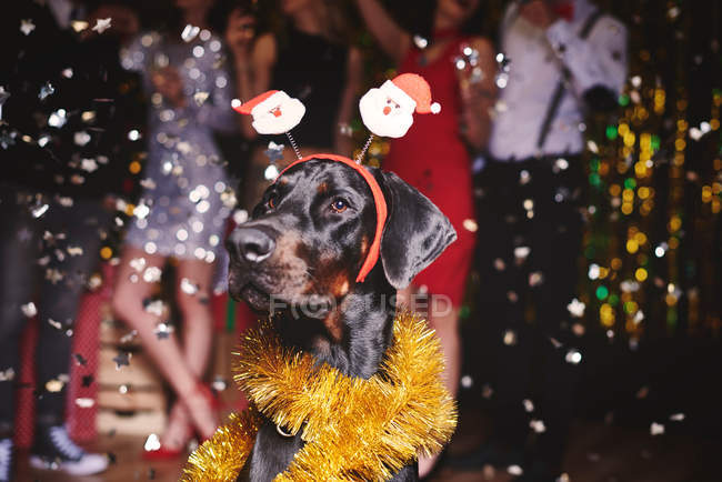 Portrait of dog at party — Stock Photo
