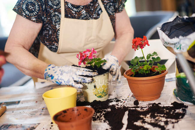 Woman potting plants on table — Stock Photo