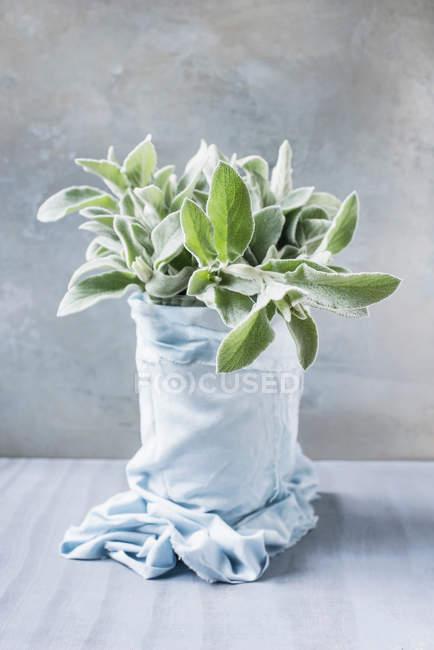 Plante enveloppée dans du tissu — Photo de stock