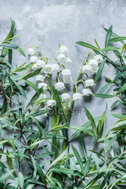 Lily of valley flowers — Stock Photo
