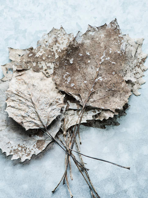 Bunch of dries leaves — Stock Photo