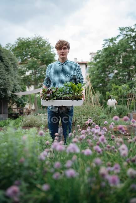 Man holding tray of plants — Stock Photo