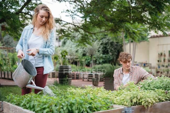 Mann und Frau tendenziell Pflanzen in Holztrögen — Stockfoto