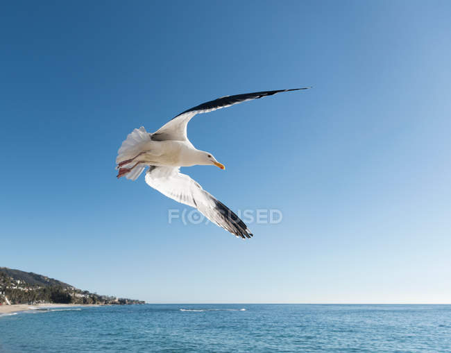 Sa vue de mouette en vol — Photo de stock
