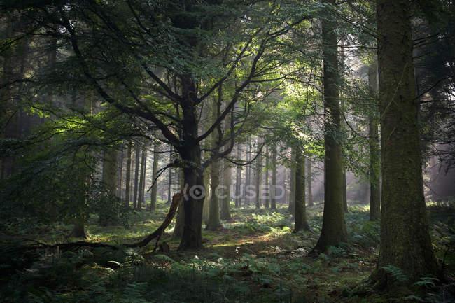 Forêt, Bord des balises, Penrith — Photo de stock