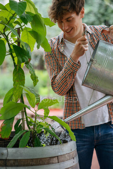 Young man watering plant in container — Stock Photo