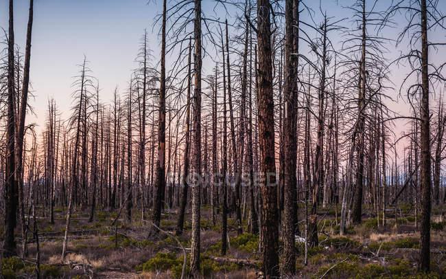 Floresta no Parque Nacional Bryce Canyon — Fotografia de Stock
