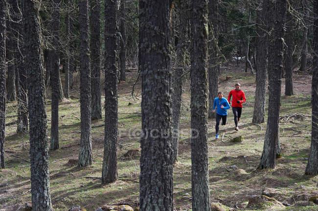 Чоловіки працюють у лісі — стокове фото