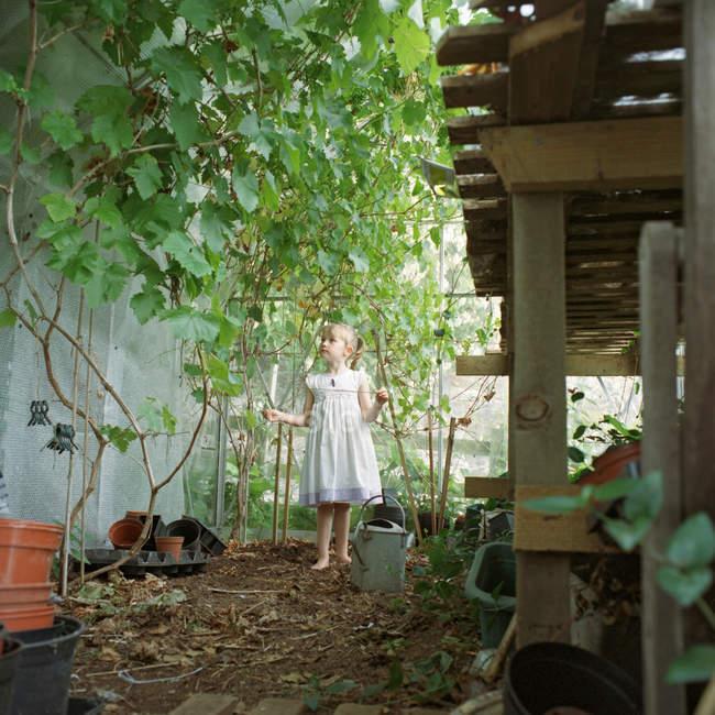 Jeune fille debout à l'intérieur de la serre — Photo de stock