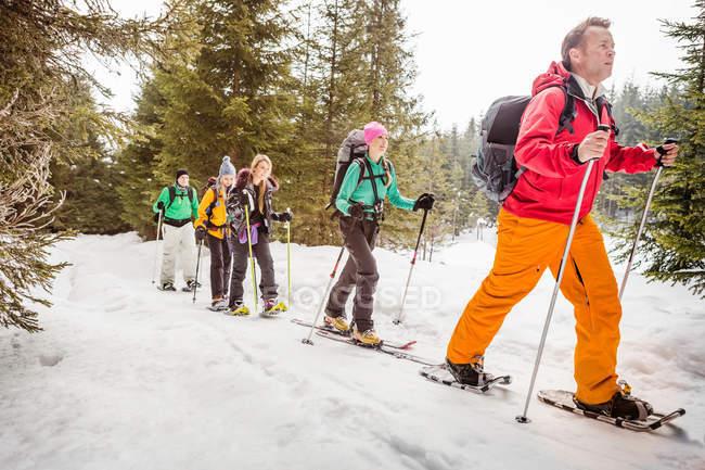 Групи людей, катання на лижах в дерев — стокове фото