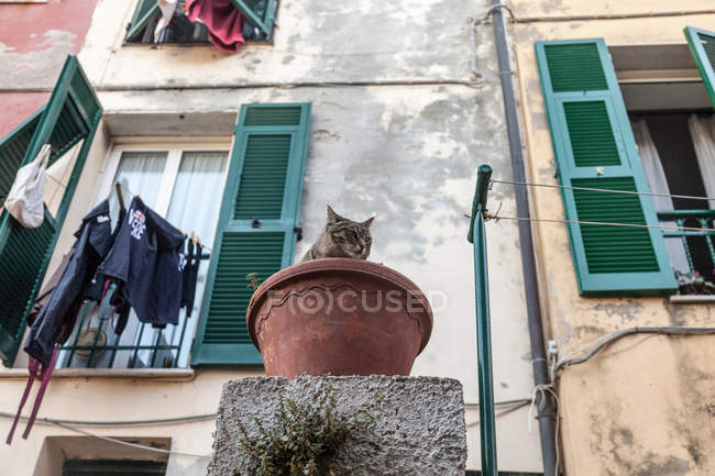 Cat sitting in flower pot — Stock Photo