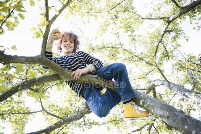 Низький кут зору хлопчик, сидячи в дерево — стокове фото