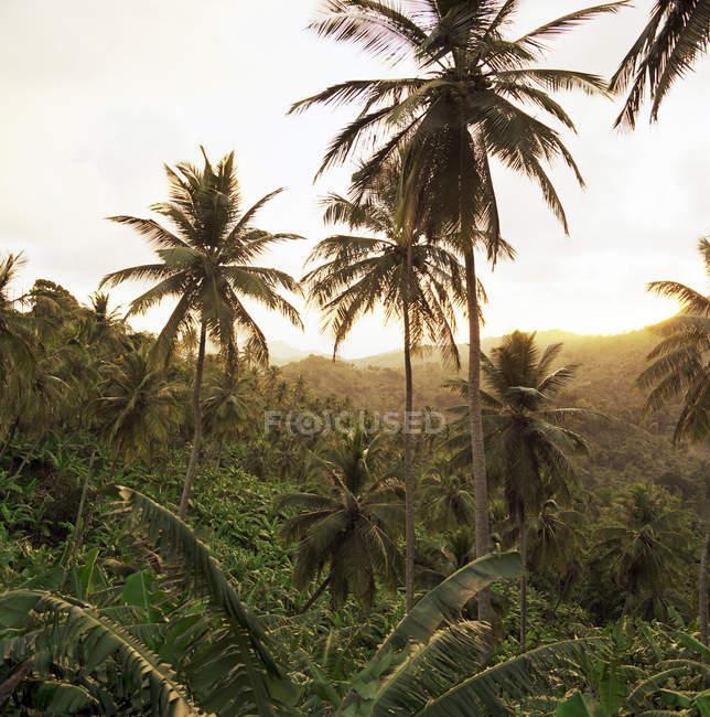 Palme nel paesaggio rurale — Foto stock