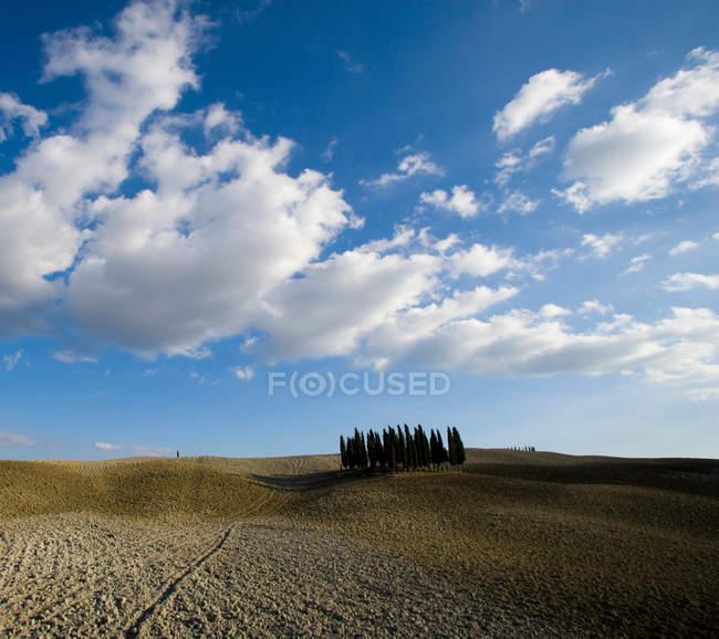 Groupe d'arbres sur le terrain paysage — Photo de stock