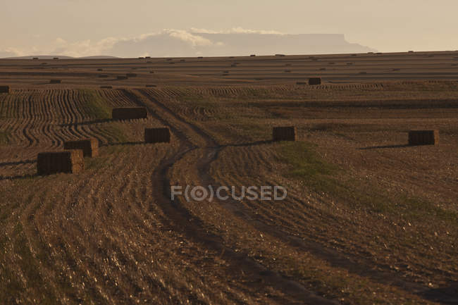 View of haystacks in harvested field — Stock Photo