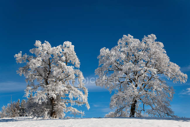 White frosted trees in winter landscape — Stock Photo