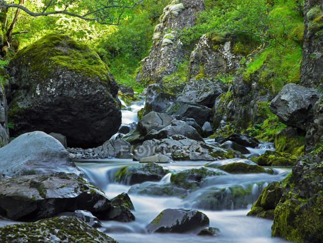 Rivière qui coule sur les rochers moussus — Photo de stock