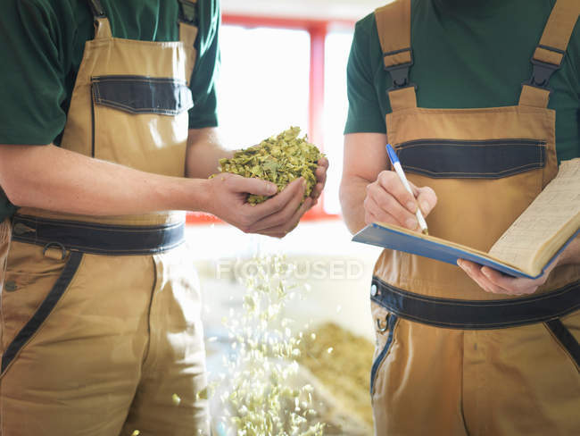 Workers selecting hops in brewery — Stock Photo
