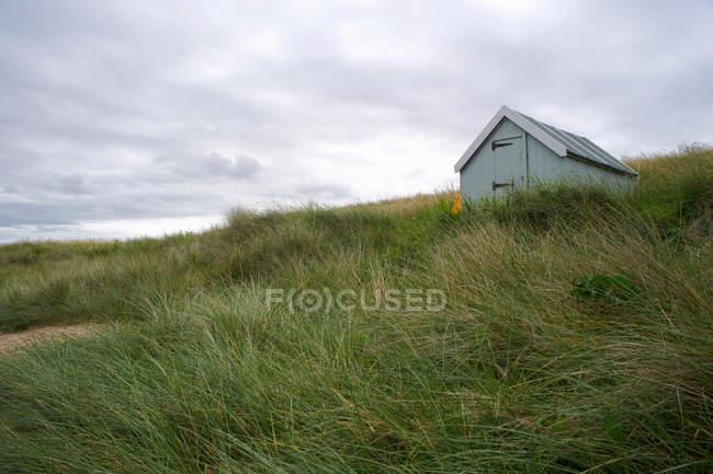 Пляж трава дме вітер — стокове фото
