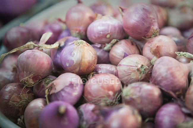 Vista do close-up de cachos de cebolas — Fotografia de Stock