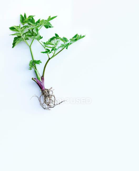 Plante verte placée sur blanc — Photo de stock