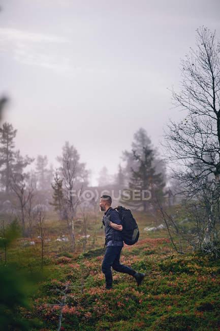 Vista lateral del excursionista con mochila caminando en el bosque - foto de stock
