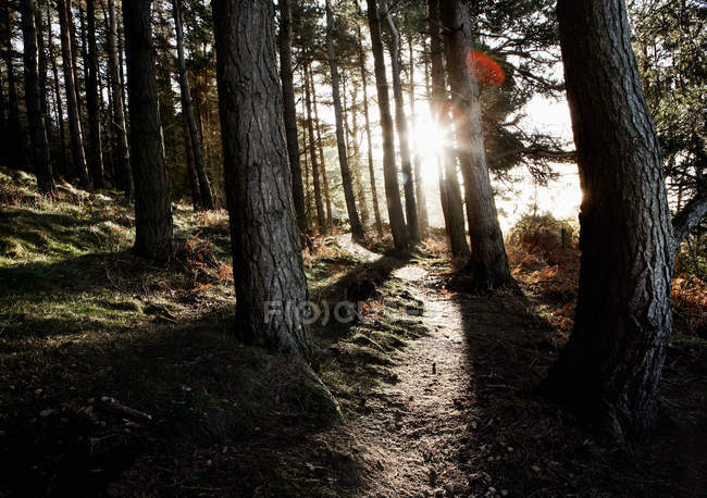 Scenic view of Path in forest with sunlight — Stock Photo