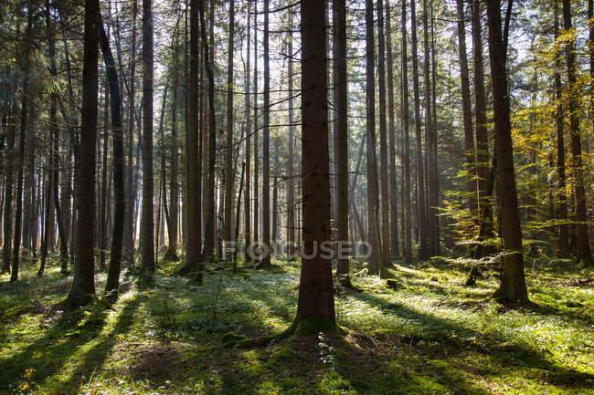 Sonne durch die kahlen Bäume — Stockfoto