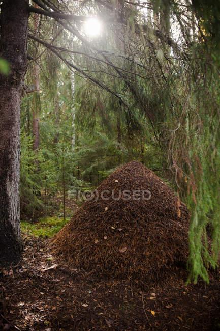 Pilha de folhas mortas — Fotografia de Stock