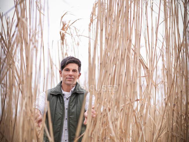 Фермер, стоящий среди Мискантуса, или слоновой травы, на ферме по сбору биомассы во время сбора урожая — стоковое фото