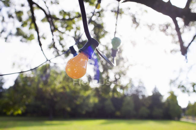 Decorative lights hanging from tree branch — Stock Photo