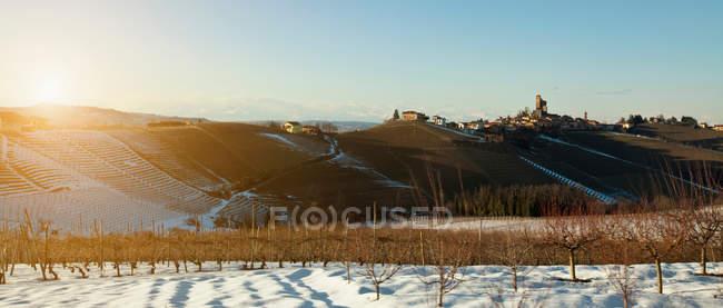 Arbres qui poussent sur la colline rurale — Photo de stock