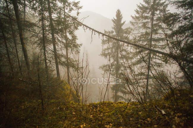 Forêt et vallée brumeuse — Photo de stock