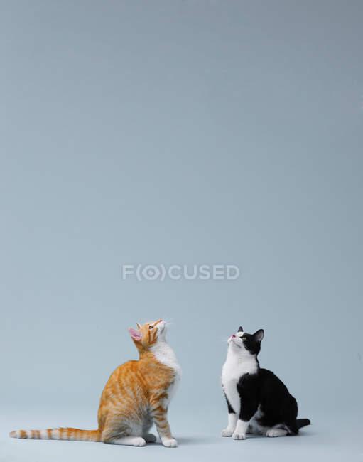 Katzen sitzen auf der Suche in Luft — Stockfoto